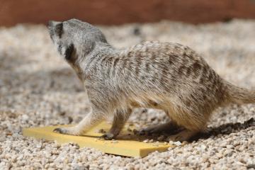 Werreby Open Range Zoo, Australia